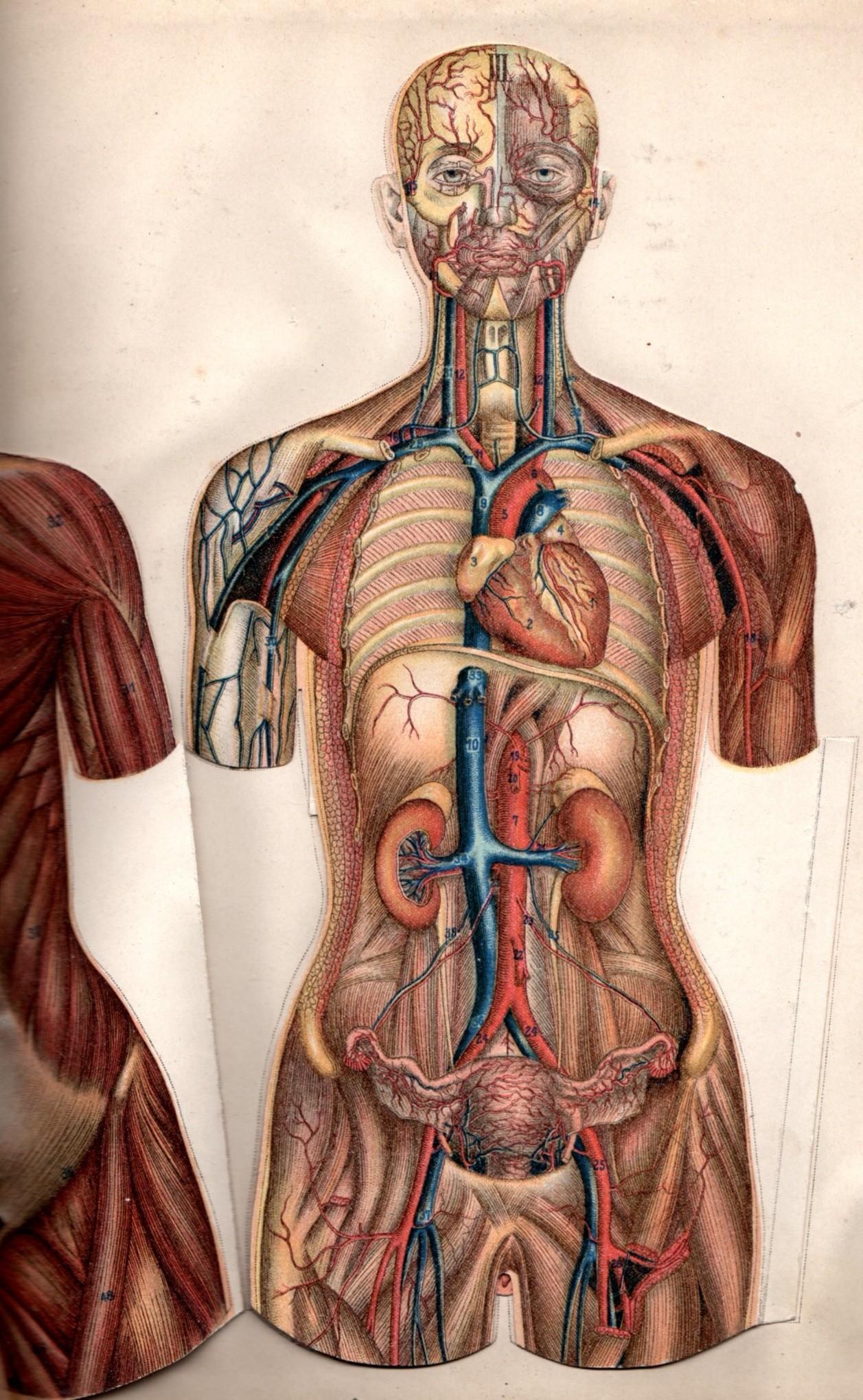 Dead body anatomy 7124934 - follow4more.info