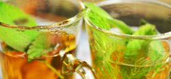 antibacterial herbs - immune system - infection