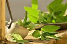 malnutrition - vitamin deficiencies - health
